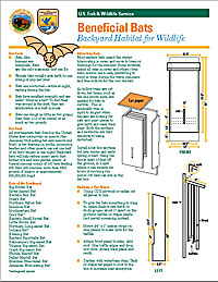 Bat House Plans | Free Bat House Plans on garden plans, bat outline template, bat romance, bat removal, florida home building plans, bat symbol, bat furry, bat traps, bat houses placement, bat houses that work, bird feeder plans, bat scat, bat drawings, bat box placement, bat food, bat houses product, bluebird feeder plans, bat boner, bat tile, chicken coop plans,