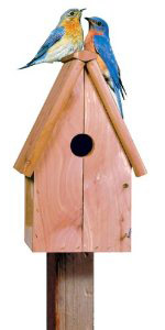 Cedar Blue Bird House