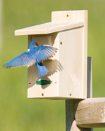 Duncraft Bluebird Houses