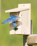 Duncraft Bird Houses